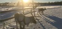 reindeer-safari-3.jpg