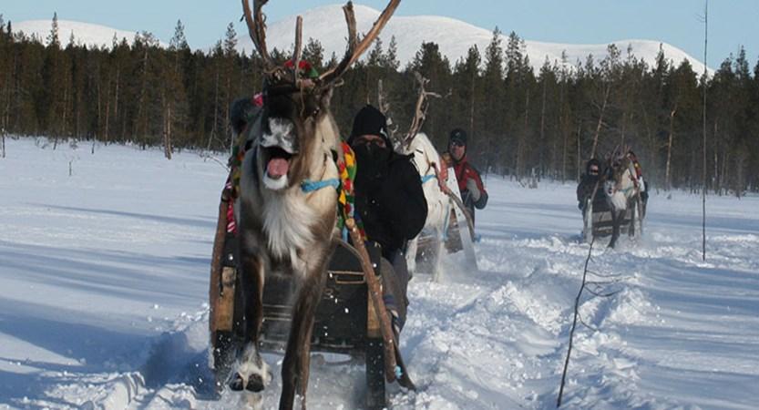 finland_lapland_yllas_reindeer-safari.jpg
