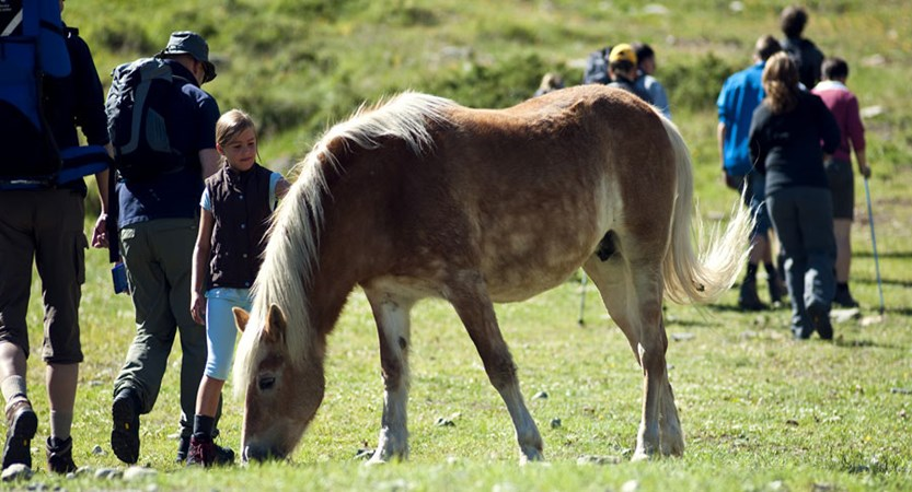 Hotel Edelweiss & Gurgl, Obergurgl, Austria - horses.jpg