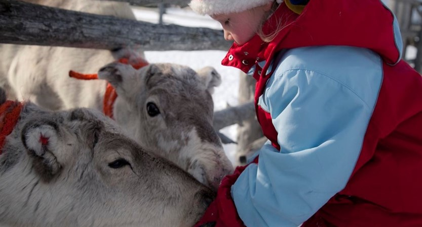 finland_lapland_levi_reindeer.jpeg