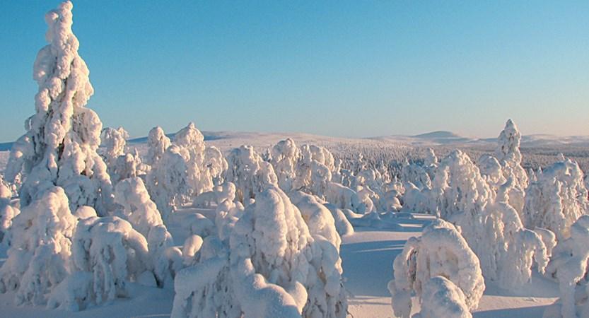 Finland_Saariselka_Scenery.jpg