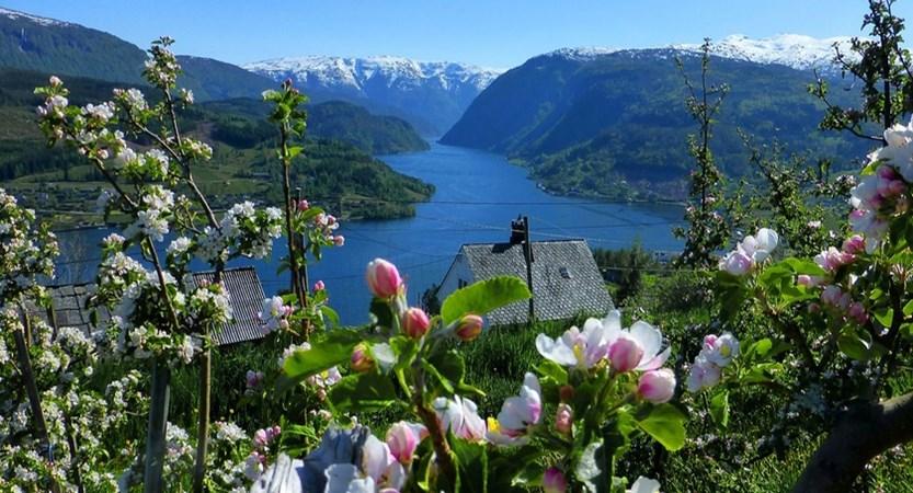 Norway_Ulvik_Orchard.jpg