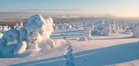 Lapland-Fact-File.jpg