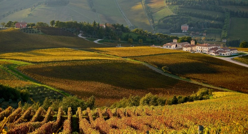 wineyard Emilia Romagna.jpg