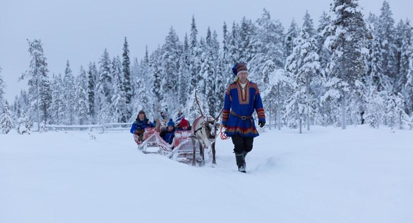 finland_lapland_yllas_reindeer.jpg (1)