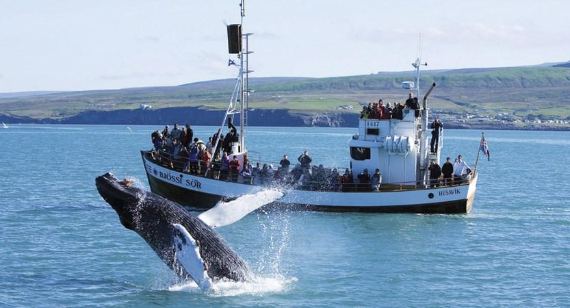 Whale_Watching_Husavik.jpg