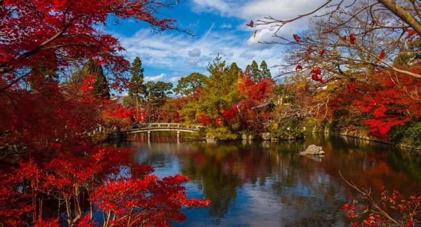 japanese-1409839_1920 (1).jpg