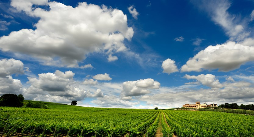 Arnaldo_Caprai_Wine_Estate_Arnaldo_Caprai_Wine_Estate_Landscape_Vines.jpg