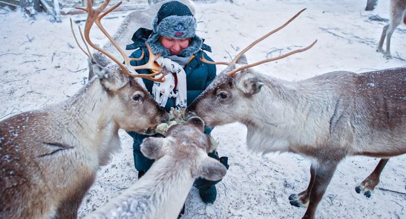 Yllas_Reindeer.jpg
