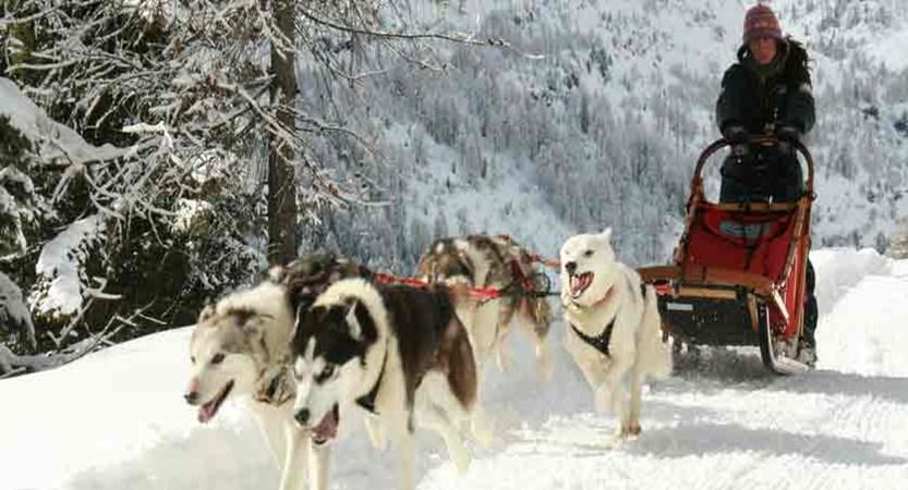 italy_livigno_huskies.jpg