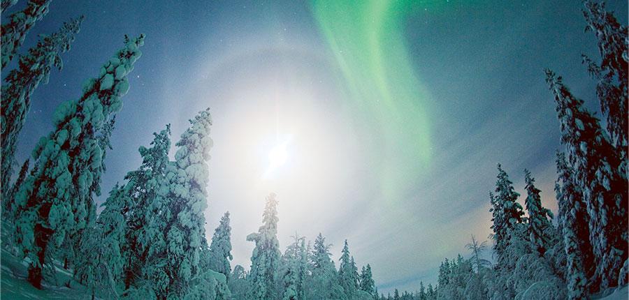 Winter Wonderland Big