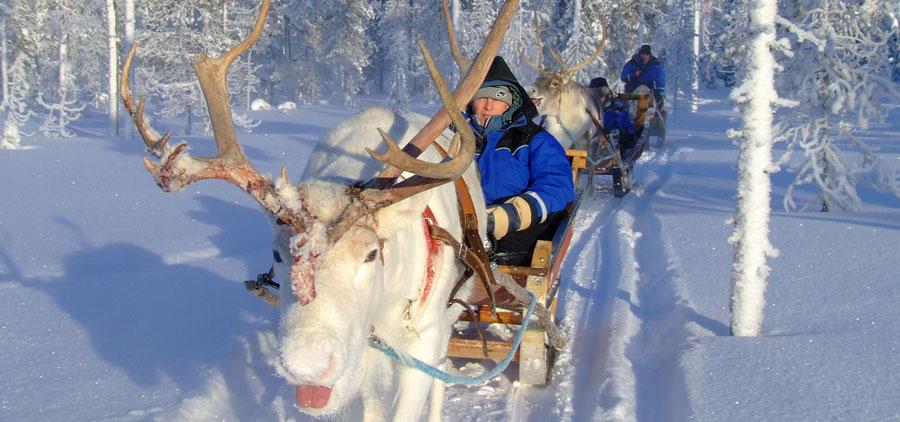 Reindeer Safari - Levi, Lapland